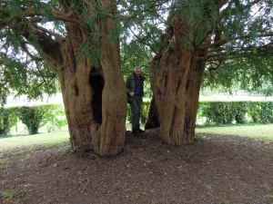 Jeremy Harte standing inside the ancient and hollow yew tree in the churchyard at Alton Priors.